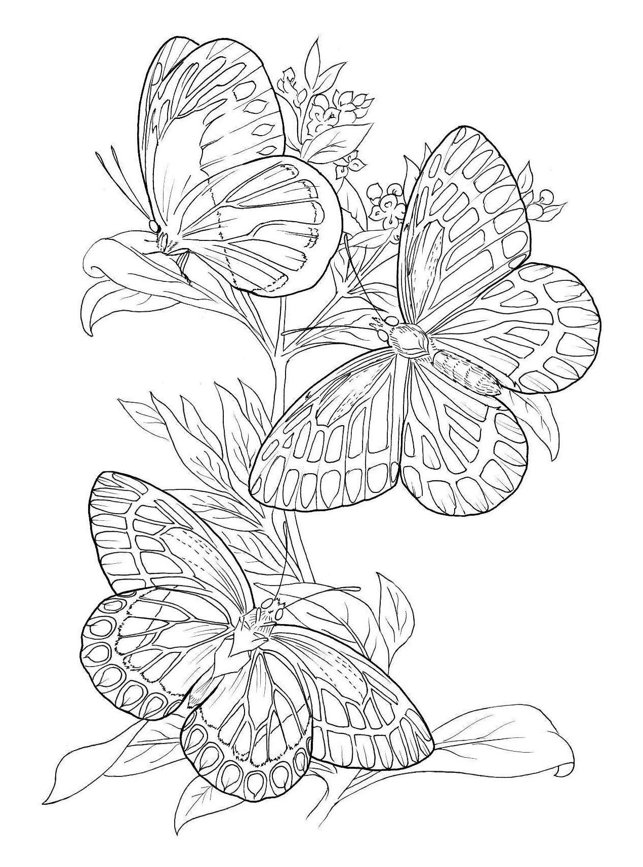 купить книгу особенная раскраска экзотические бабочки Book24