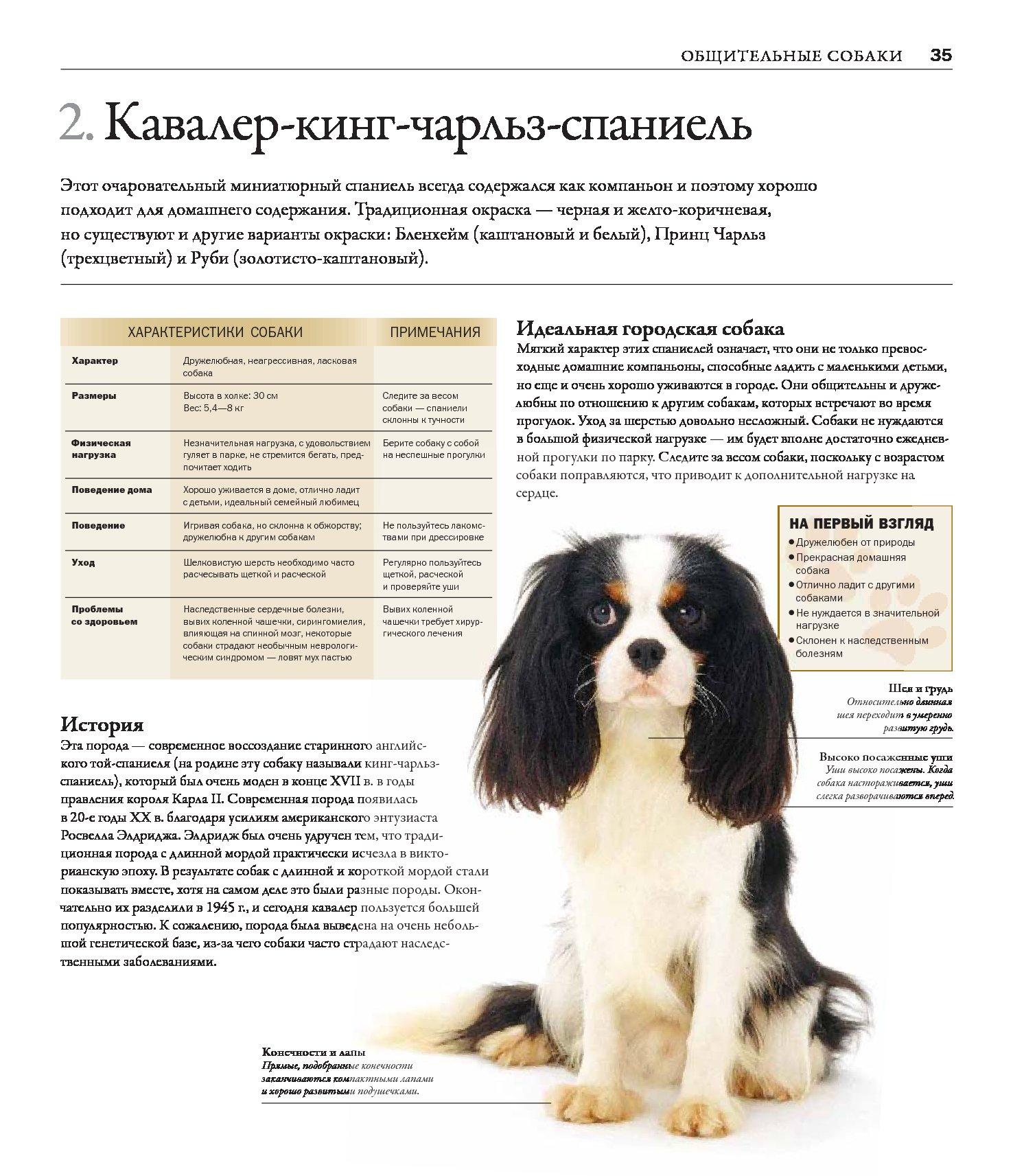 Все породы собак для вышивки