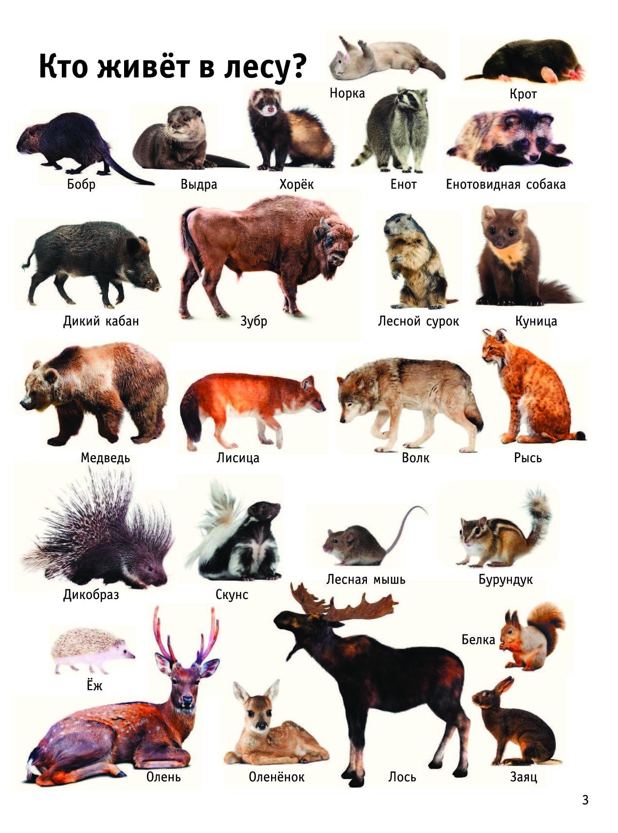 моющиеся фотообои название всех животных в лесу с картинками сша сказали