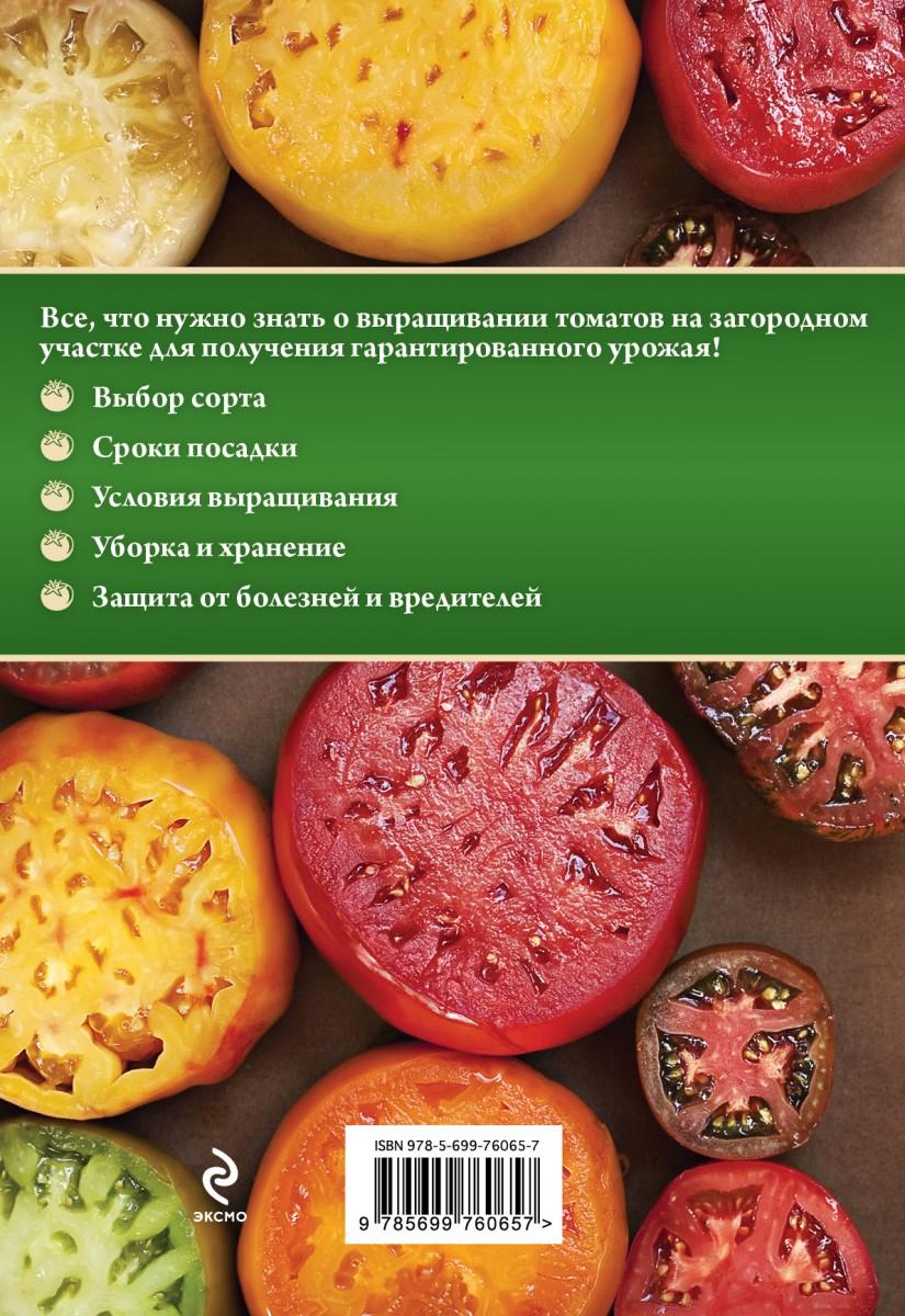 От рассады до урожая томаты 586