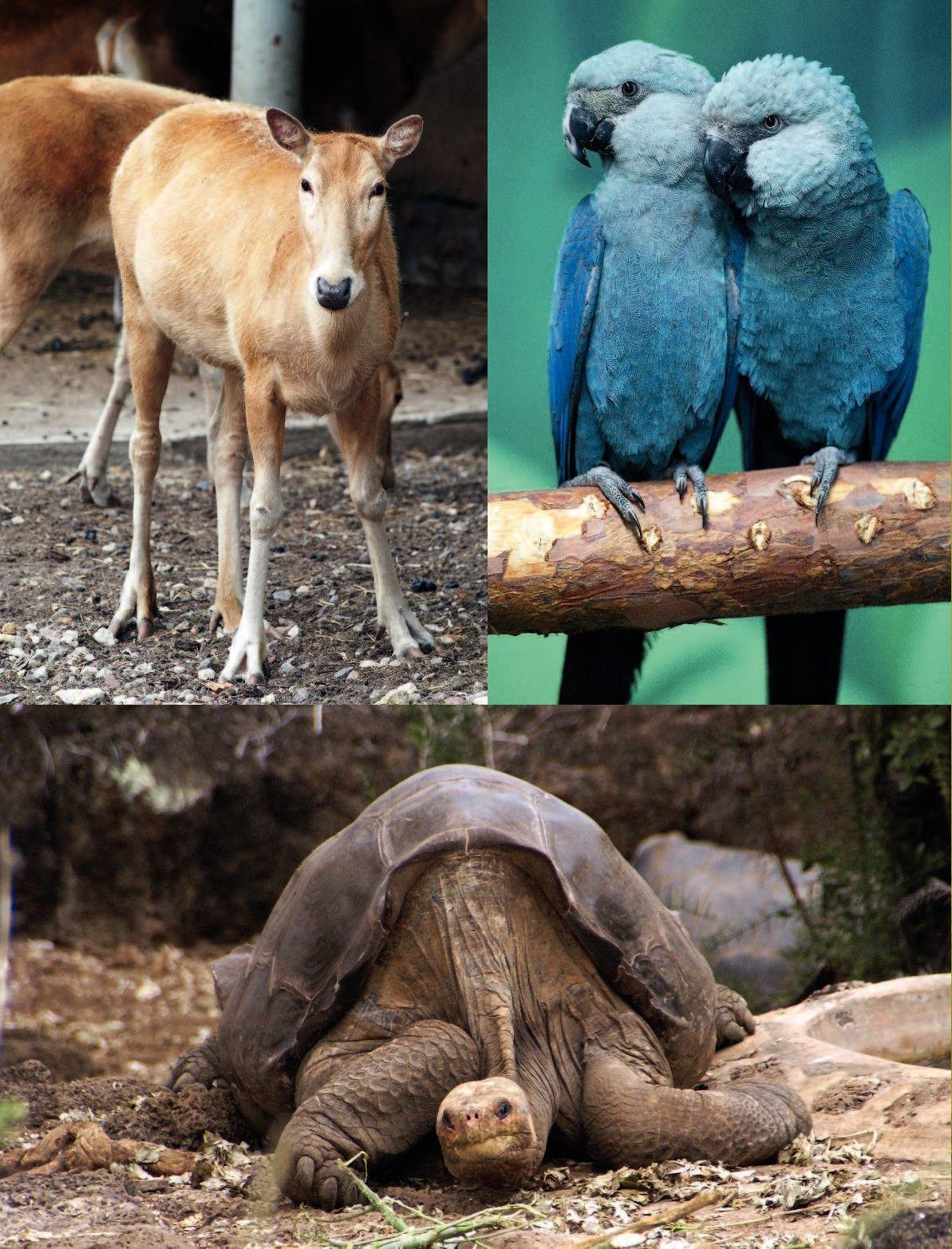 открытка животные красной книги всего мира фото прошлом году
