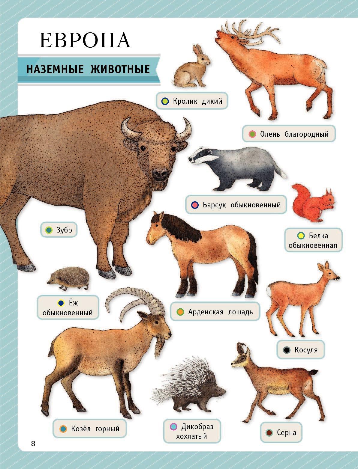все животные мира список фото вот что вытащил