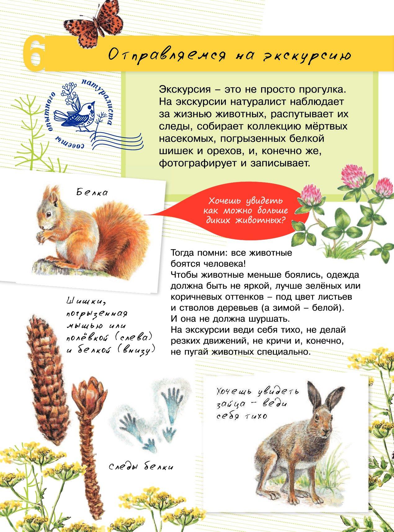 Изображение юного натуралиста