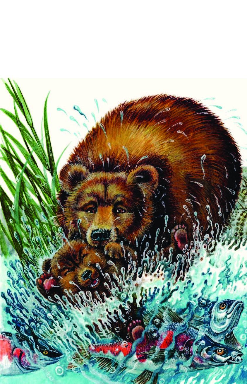 вам иллюстрации к рассказу в бианки купание медвежат своего
