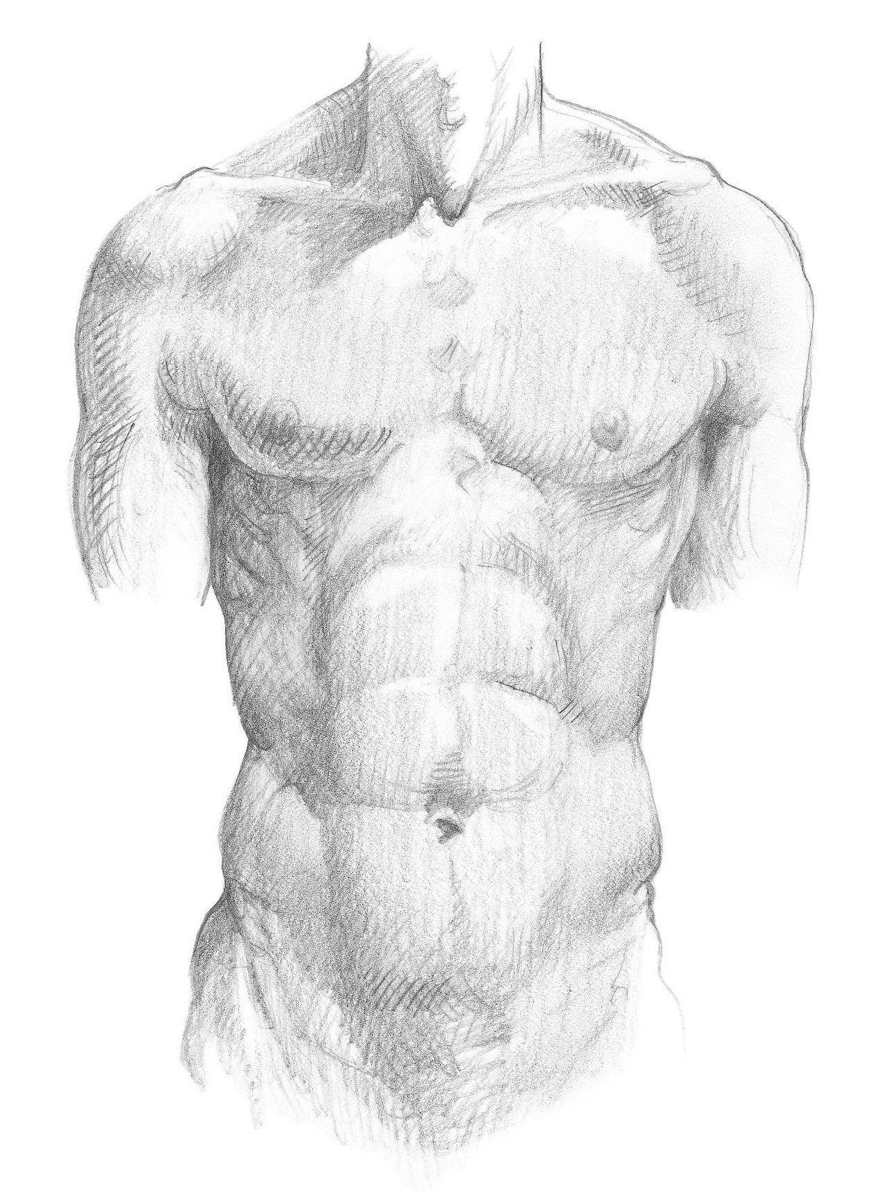 Картинки тела для художников