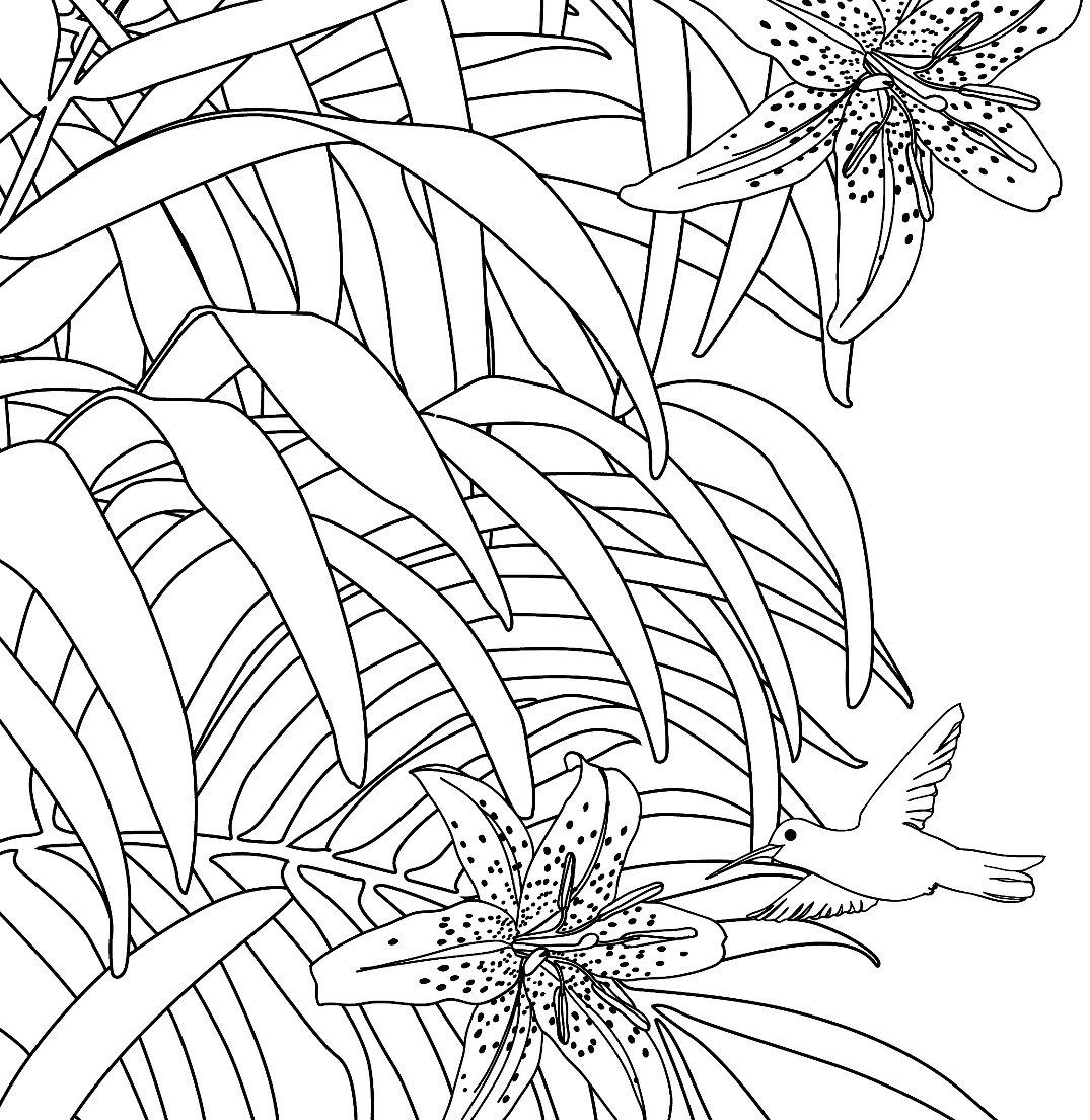 Распечатать картинки для раскрашивания растения
