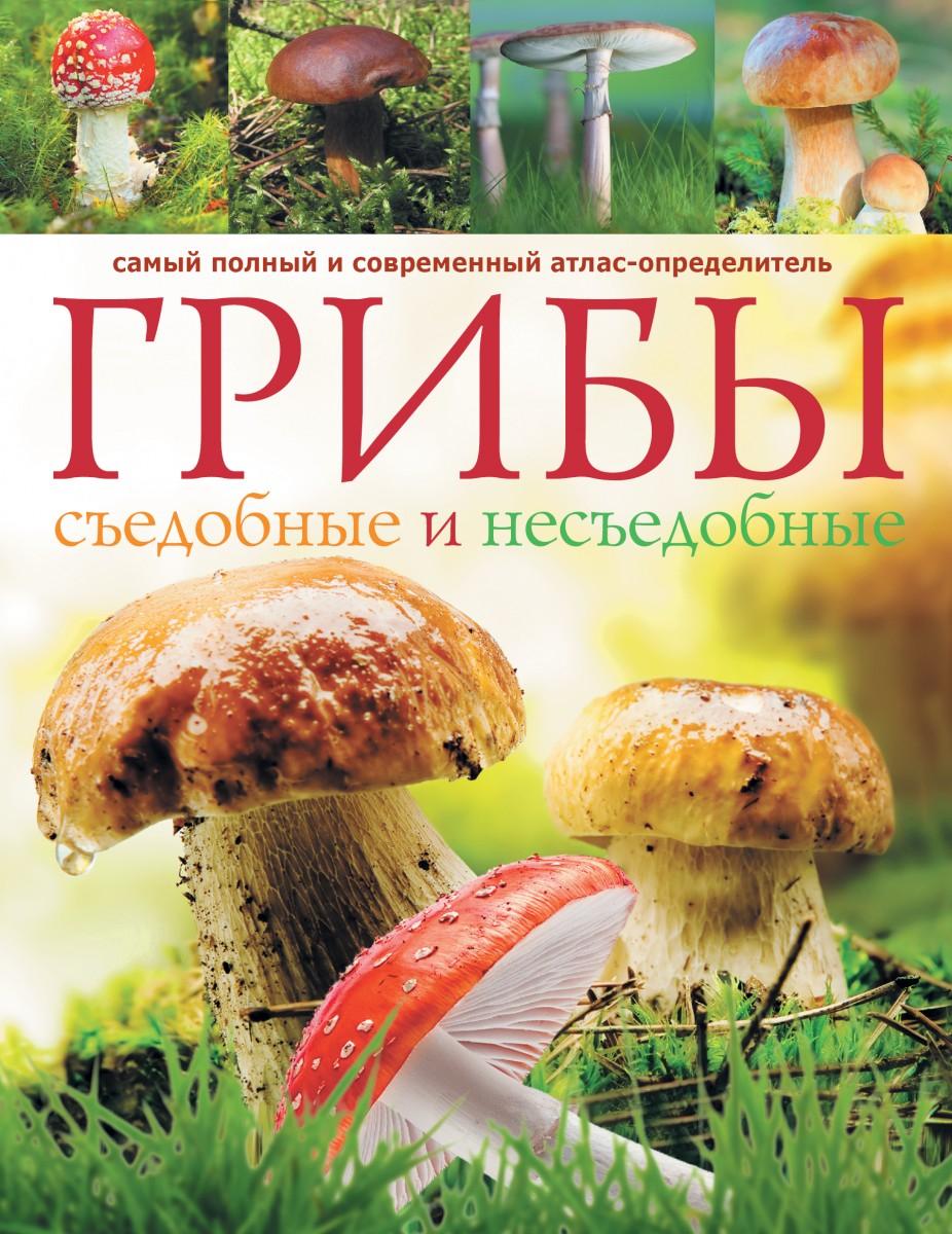 Картинки съедобных грибов с надписями, открытка