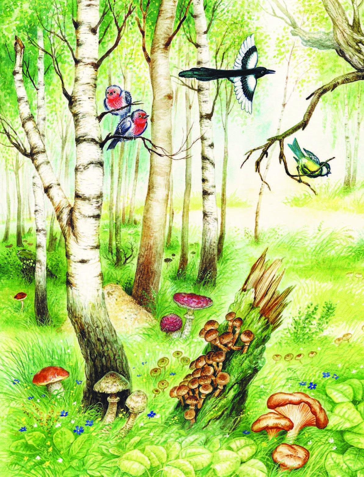 бывают вовсе лесные картинки отрывок неё появился