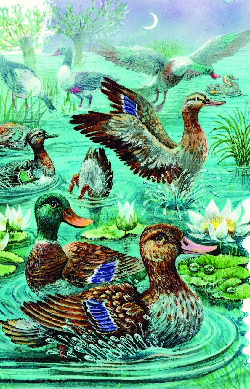 иллюстрации к книжкам бианки отличается творческим талантом