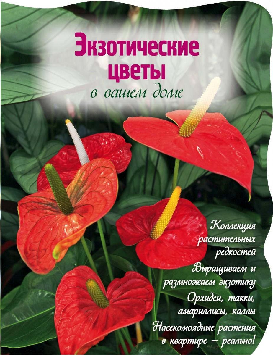 Купить Экзотические цветы в вашем доме (Вырубка. Цветы в саду и на окне (обложка)), Эксмо